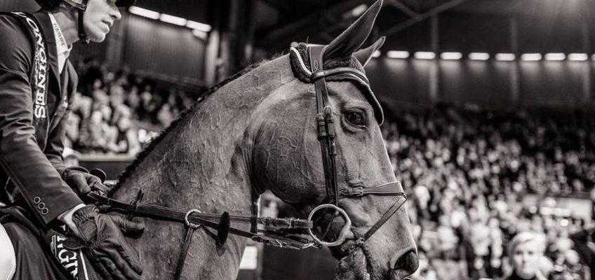 Nach langer Verletzungspause: Henrik von Eckermann nimmt Erfolgsstute Toveks Mary Lou aus dem Sport