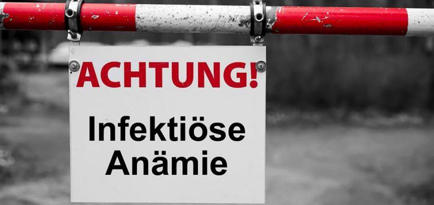 Neue Fälle von Infektiöser Anämie in Deutschland – Fünf Pferde in Niedersachsen und Nordrhein-Westfalen betroffen