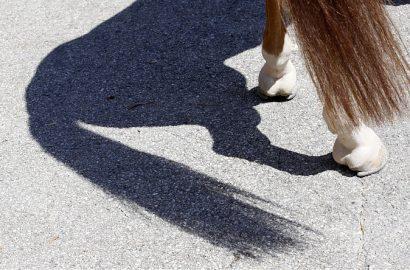 Aktuelle Fakten zum Thema Tagestourismus rund um das Pferd