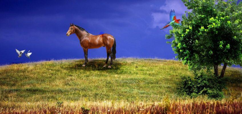 """Jetzt für """"Pferde fördern Vielfalt"""" abstimmen"""