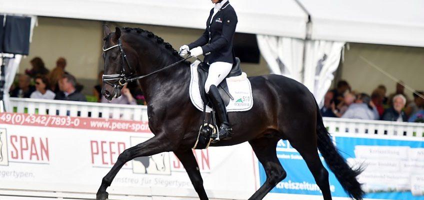 Hannoveraner Reitpferde-Champions gesucht – Verden International