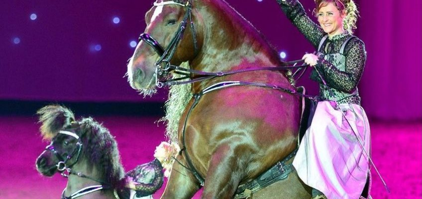 Faszinierende Gala-Show in Vechta