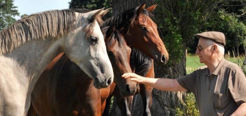 Josef Unkelbachs Springpferde-Zucht geht an Elmar Pollmann-Schweckhorst