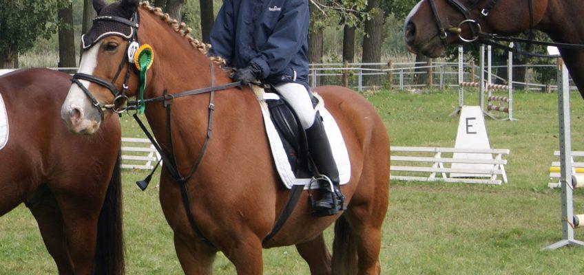 So finden Reitschulen geeignete Ponys