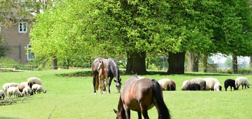 Pferdezuchtverbände laden zur Informations- und Diskussionsveranstaltung zum Thema Wolf!