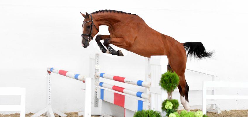 Preisspitze bei PS Online-Auktion erreicht 51.000 Euro