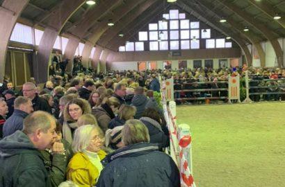 """""""Es war Wahnsinn"""": 60 Holsteiner Pferde ratzfatz versteigert"""