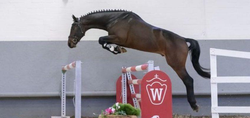 Westfälische Winter-Auktion brachte mehr als 1 Million Euro