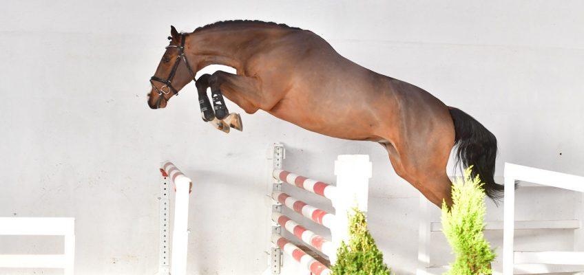 Erfolgsergebnis bei PS-Online-Auktion: Rund 400.000 Euro