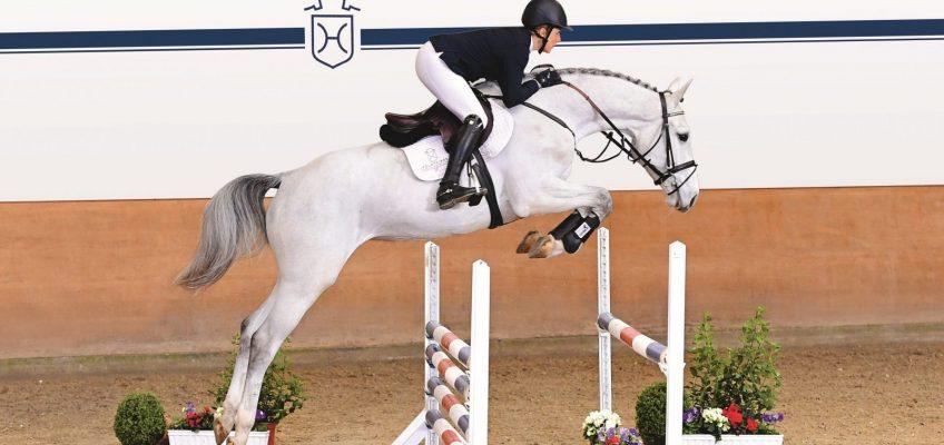 Präsentation der Holsteiner Auktionspferde auch bei Clipmyhorse