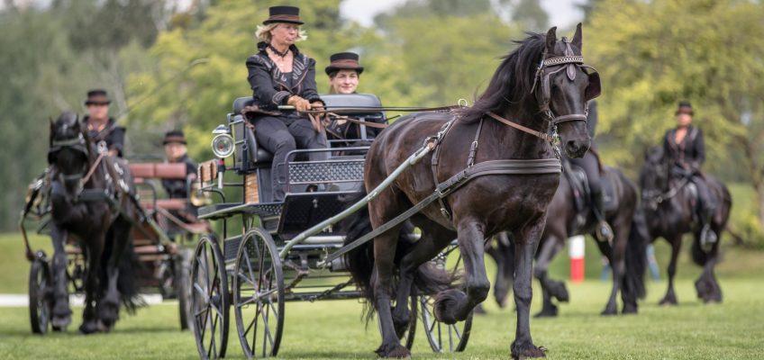 Trickreiter und Zehnerzüge: Stars im Schauprogramm bei Pferd International München