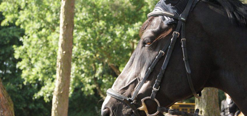 """""""Wer aufs Pferd steigt, kann sich besser vor Corona schützen"""""""