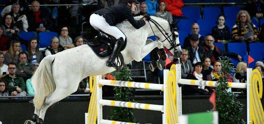 """Holsteiner Hengst Contagio: """"No Sports"""" – Voller Deckeinsatz"""