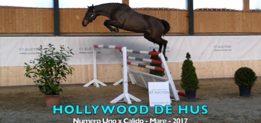 Bieter-Wettstreit um junge Pferde und Samen bei ET Auction