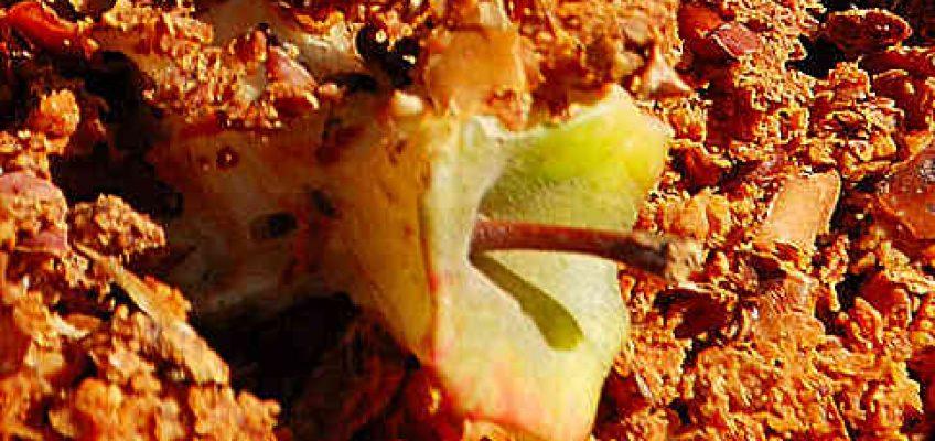 Galopper warnen vor Dopinggefahr durch Apfeltrester im Pferdefutter