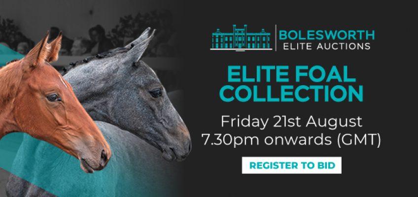 Bolesworth Elite-Fohlen-Kollektion ist online zu entdecken