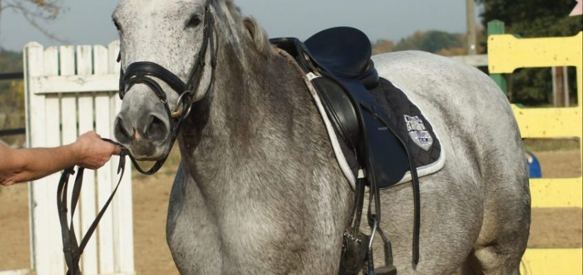 FN will Ausnahme für Pferde im Kaufrecht erreichen