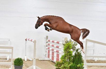 Preisspitze von  85.000 Euro bei der PS Online-Auktion