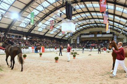 Holsteiner Körung und Elite-Auktion: Restkarten für Freitag und Samstag