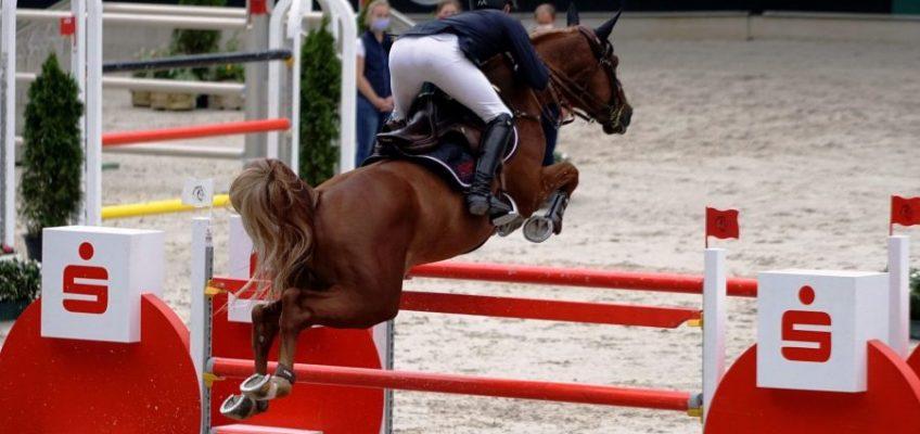 NEURO SOCKS AMADEUS HORSE INDOORS 2020: Wir ziehen durch!