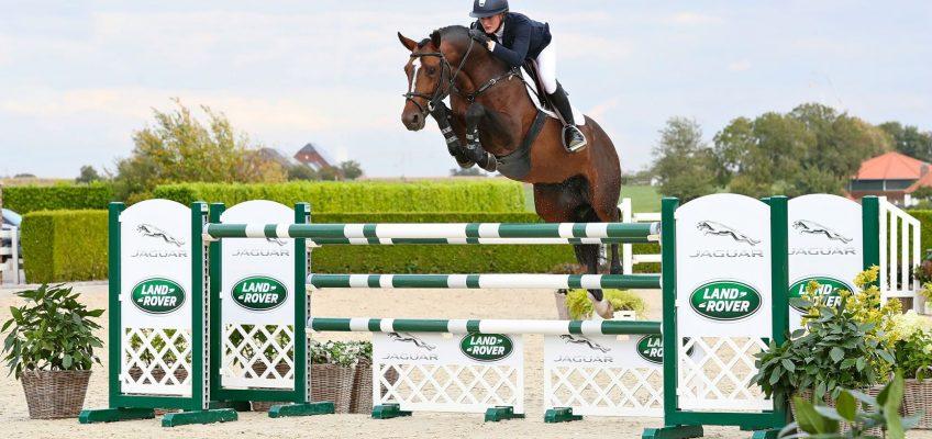 16. Springpferdeauktion von Holger Hetzel findet nicht statt – Auktionspferde stehen zum freien Verkauf