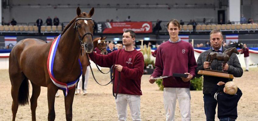 Vigo d'Arsouilles-Sohn Vigado Sieger bei Holsteiner Körung