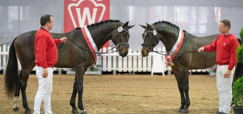Erstmals zwei Hengste in Westfalen als Sieger ausgezeichnet!