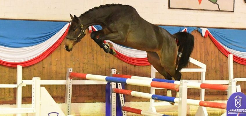 Zweite Holsteiner Winter-Chance: 58.500 Euro für Casall-Tochter