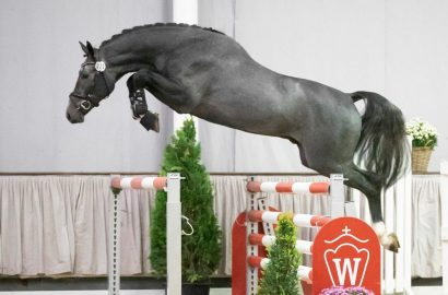 Westfalens Youngster top – 52.000 Euro für Chacoon Blue-Sohn