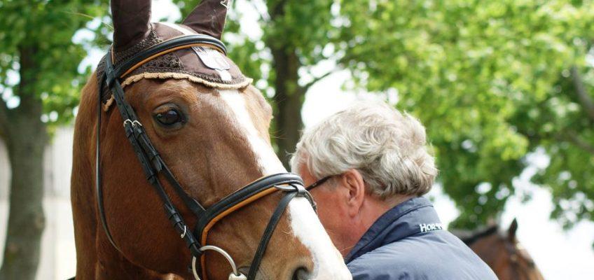 Beweislastumkehr beim Pferdekauf bleibt unverändert!