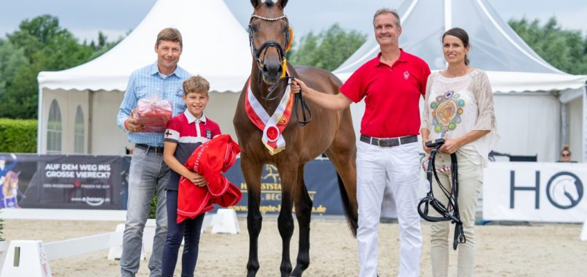 Westfälisches Pferdestammbuch kürt die besten Stuten